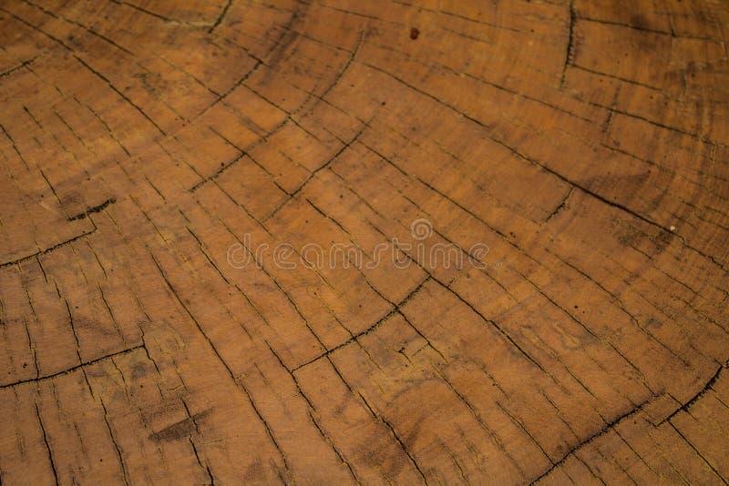 Arbre réduit par rond idéal avec les anneaux annuels et les fissures Texture en bois photographie stock libre de droits