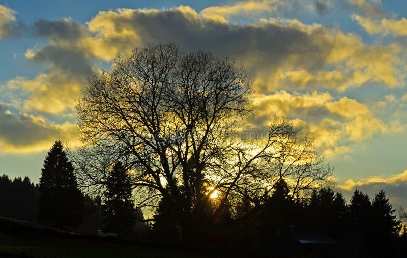Arbre rétro-éclairé au coucher du soleil image stock