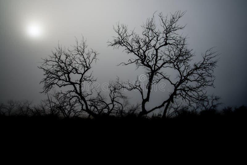 Arbre rampant de brouillard images libres de droits