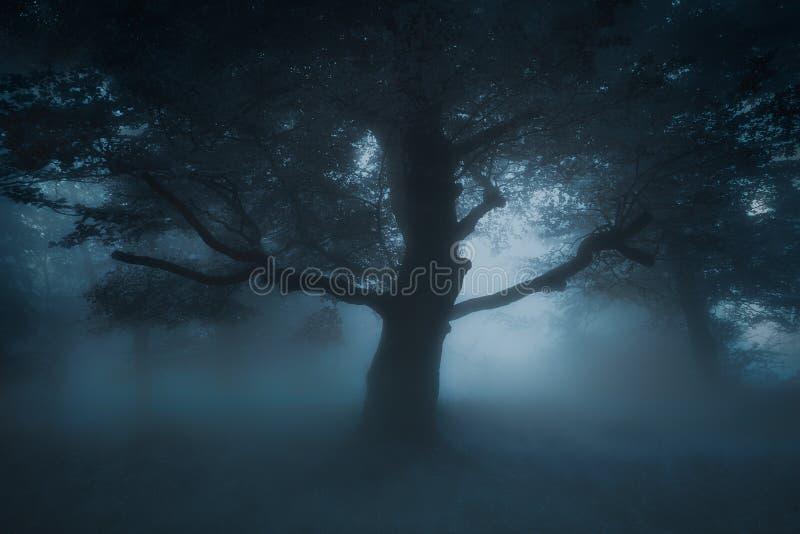 Arbre rampant effrayant sur la forêt de cauchemar photographie stock