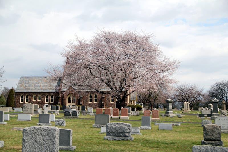 Arbre rose dans le cimetière images stock