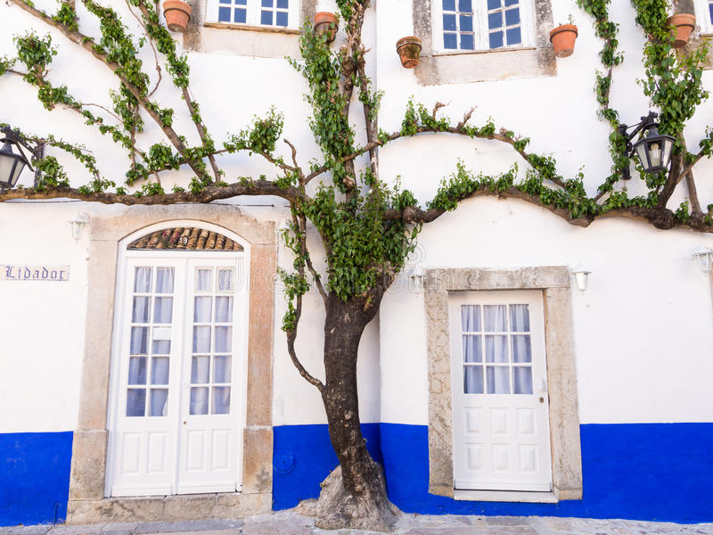 Arbre s'élevant autour des portes et des fenêtres d'un bâtiment dans Obidos photographie stock libre de droits