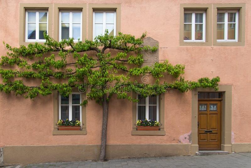 Arbre s'élevant sur le mur avec la porte et des fenêtres en Europe photos libres de droits