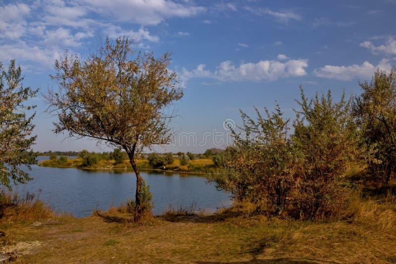 Arbre s'élevant sur le rivage du lac photo stock