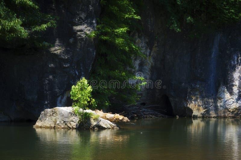 Arbre s'élevant sur une roche en nouvelle rivière, Damas, la Virginie photographie stock libre de droits