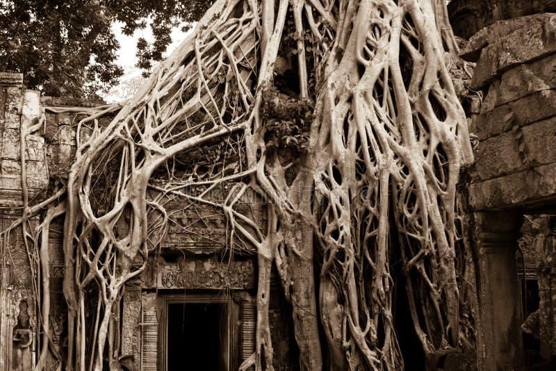 Arbre s'?levant sur Angkor Wat Temple photos libres de droits