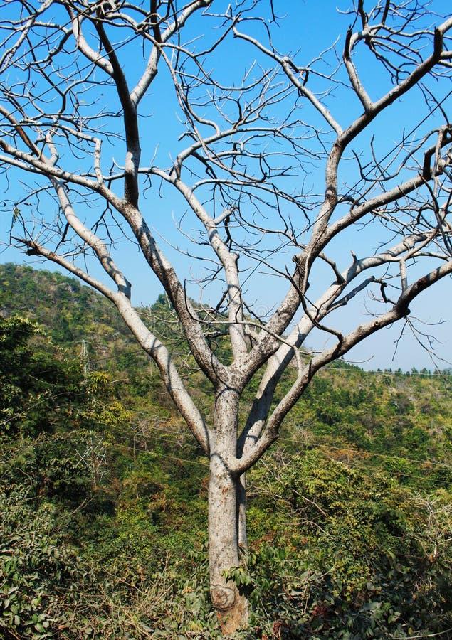 Arbre sans feuille dans une forêt photo libre de droits