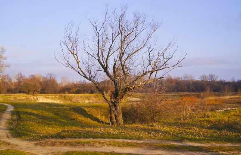 Arbre sans feuilles tenant le sentier pi ton proche photo - Arbres sans feuilles ...