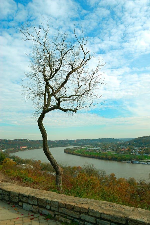 Arbre Scraggly en automne photo stock