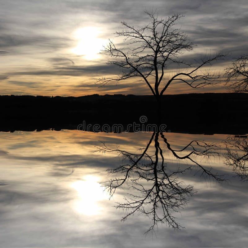 Arbre se reflétant dans un lac, paysage mystique images libres de droits