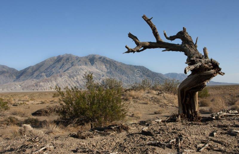 Arbre sec dans le désert, montagnes à l'arrière-plan Death Valley, la Californie, Etats-Unis photographie stock