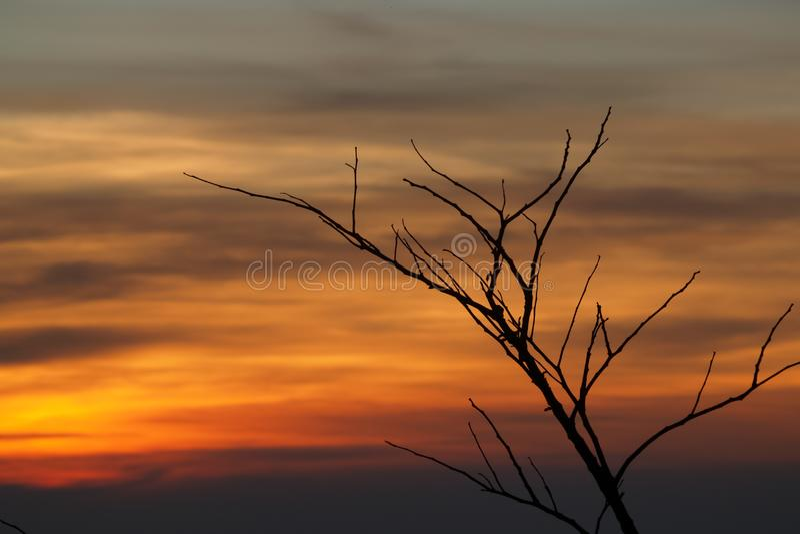 Arbre sec de silhouette contre le coucher du soleil image stock