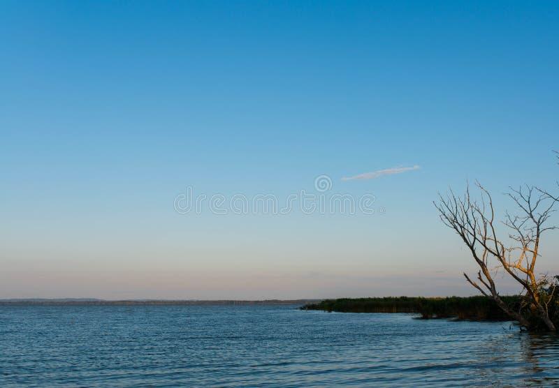 Arbre sec de sycomore au-dessus de beau lac Balaton en Hongrie dans le début de la matinée photos stock