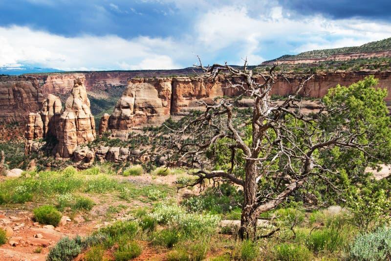 Arbre sec en monument national du Colorado photographie stock