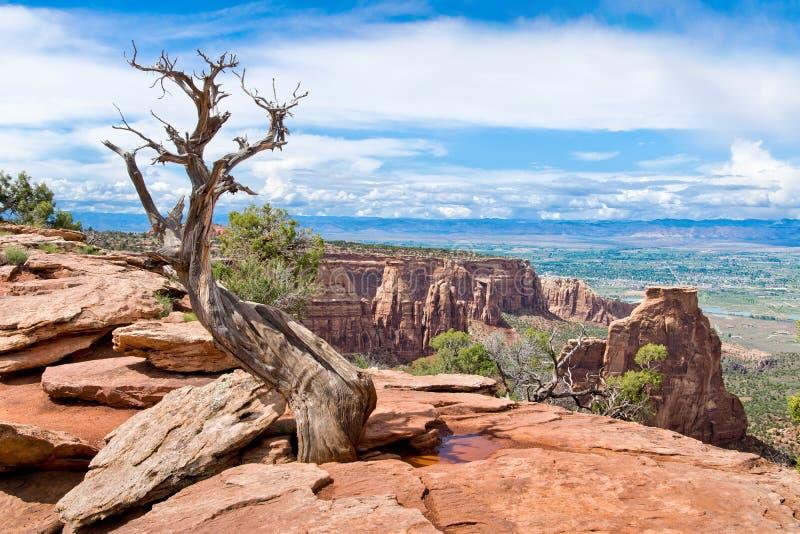 Arbre sec en monument national du Colorado images stock
