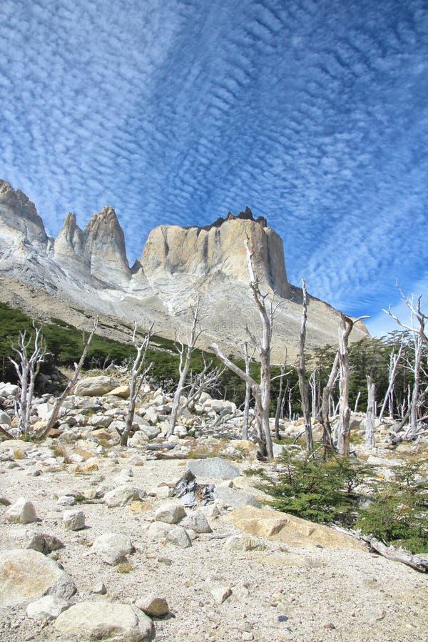 Arbre sec en parc national de Torres del Paine, Cuernos, Patagonia, photographie stock libre de droits