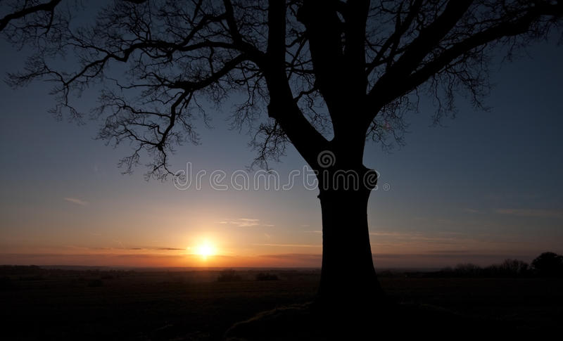 Arbre silhouetté au coucher du soleil images stock