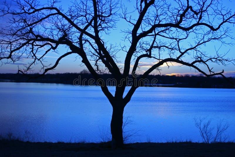 Arbre silhouetté au coucher du soleil photographie stock libre de droits