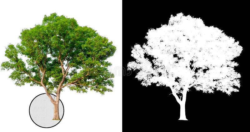 Arbre simple avec le chemin de coupure illustration libre de droits