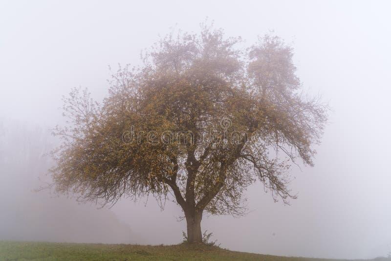 Arbre simple dans la brume d'automne photographie stock libre de droits