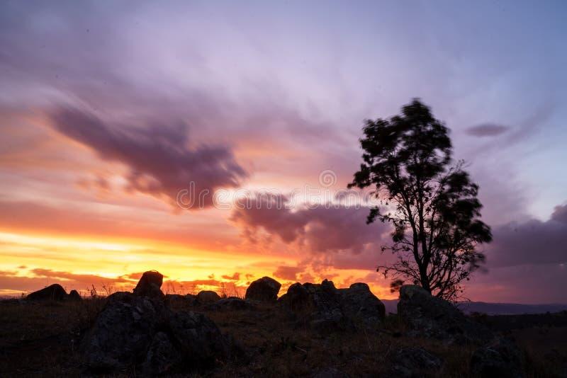 Arbre simple dans un désert avec un beau ciel nuageux à l'arrière-plan au coucher du soleil image libre de droits