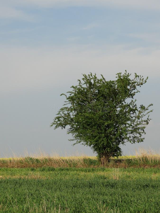 arbre simple de zone photographie stock