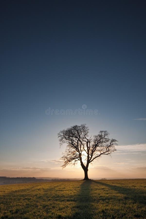 Arbre simple silhouetté au coucher du soleil image stock
