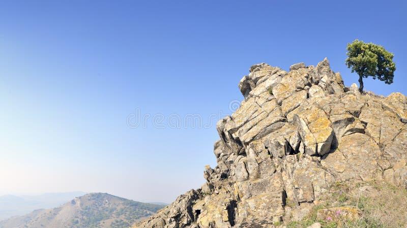 Arbre simple sur des roches photographie stock