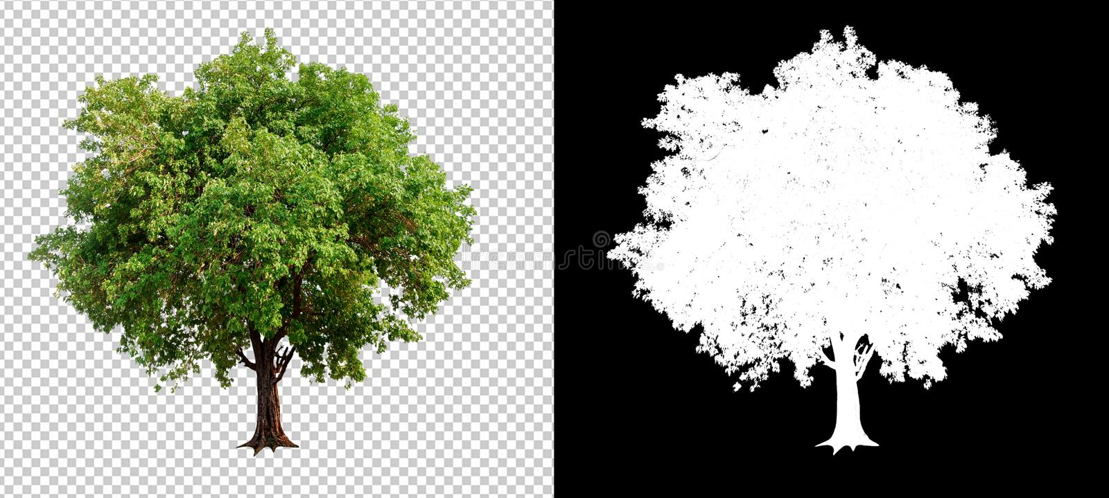 arbre simple sur le fond transparent d'image images stock