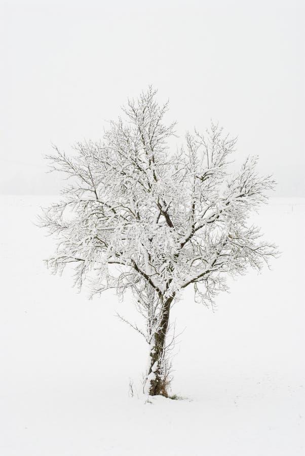 Arbre Snow-covered images libres de droits