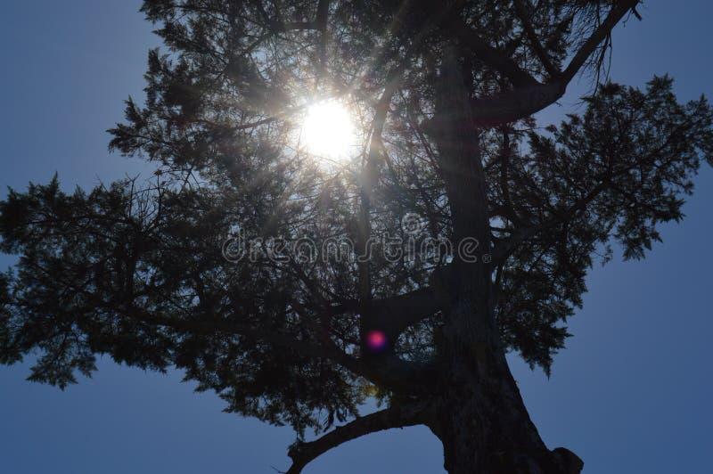 Arbre solaire photos stock