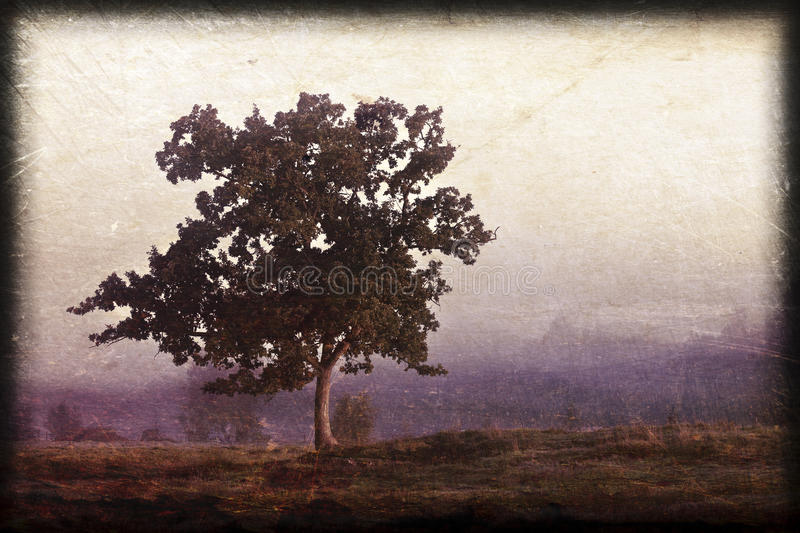 Arbre solitaire image stock