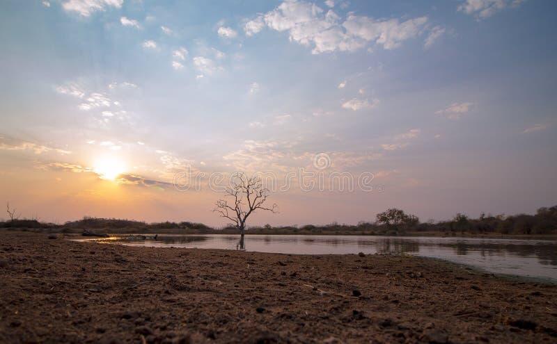 Arbre solitaire africain image libre de droits