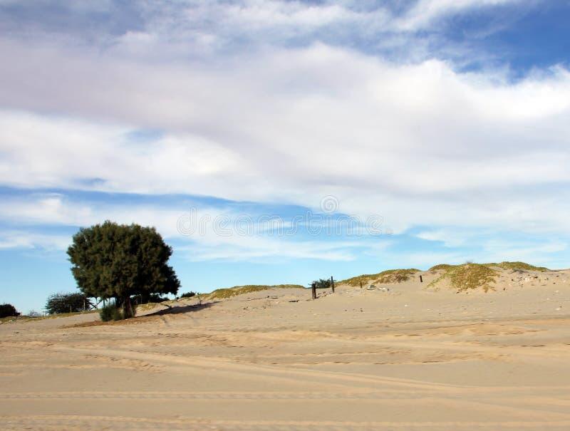 Arbre solitaire dans le sable le long de la mer de Cortez, EL Golfo De Santa Clara, Sonora, Mexique image stock