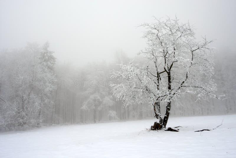 Arbre solitaire en hiver, paysage neigeux avec la neige et brouillard, forêt brumeuse dans le backgroud images libres de droits