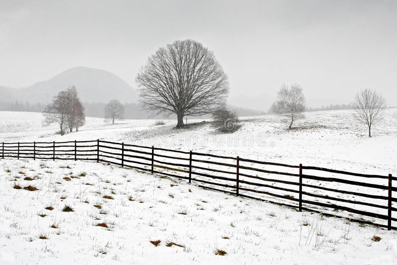 Arbre solitaire en hiver, paysage neigeux avec la neige et brouillard, forêt brumeuse dans le backgroud image libre de droits