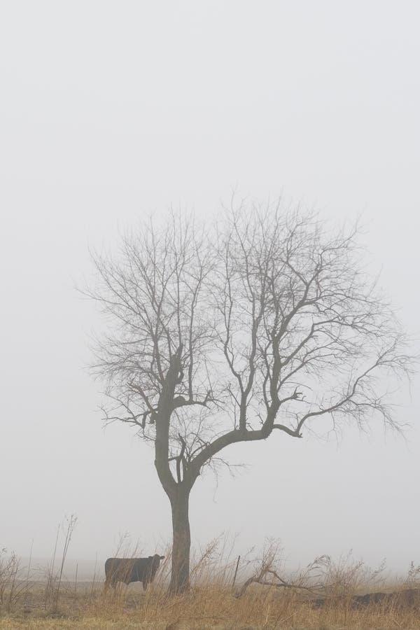 Arbre solitaire par la vache dans le brouillard image stock