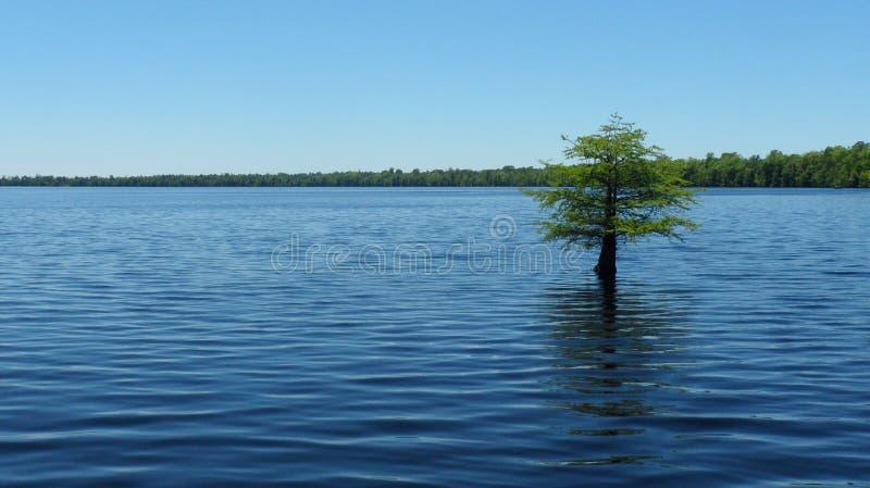 Arbre solitaire paysage dans de l'eau †« photo stock