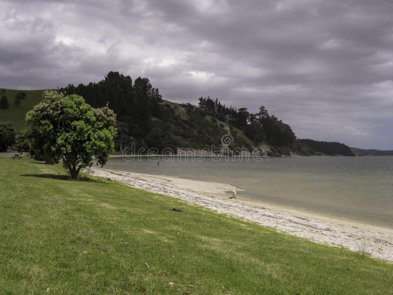 Arbre solitaire sur la côte verte sous le ciel nuageux gris image libre de droits