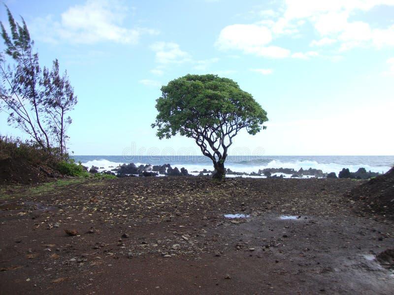Arbre solitaire sur la plage image libre de droits