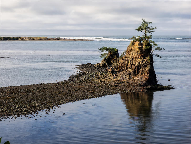 Arbre solitaire sur la roche à la baie côtière images libres de droits