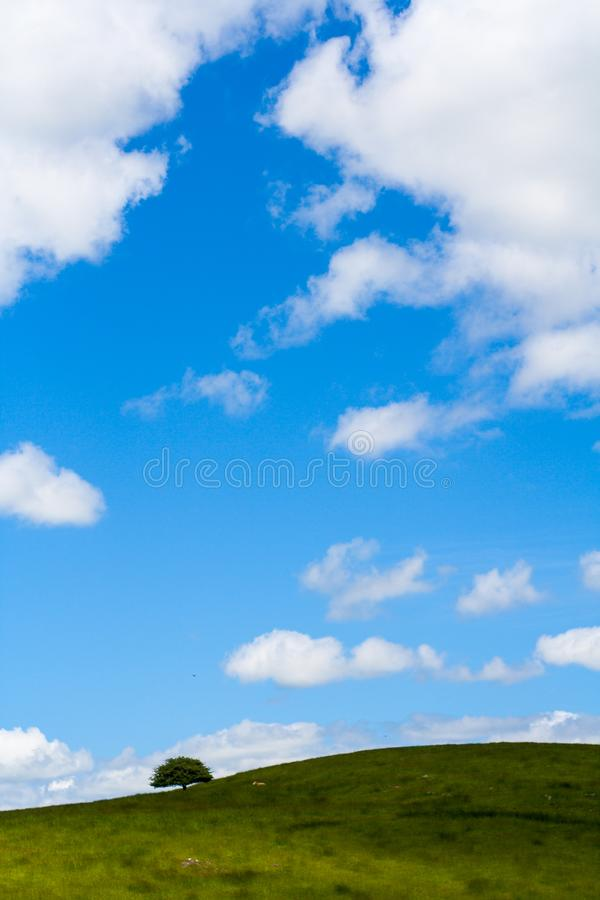 Arbre solitaire sur une colline herbeuse sur l'horizon sous un ciel bleu photo stock