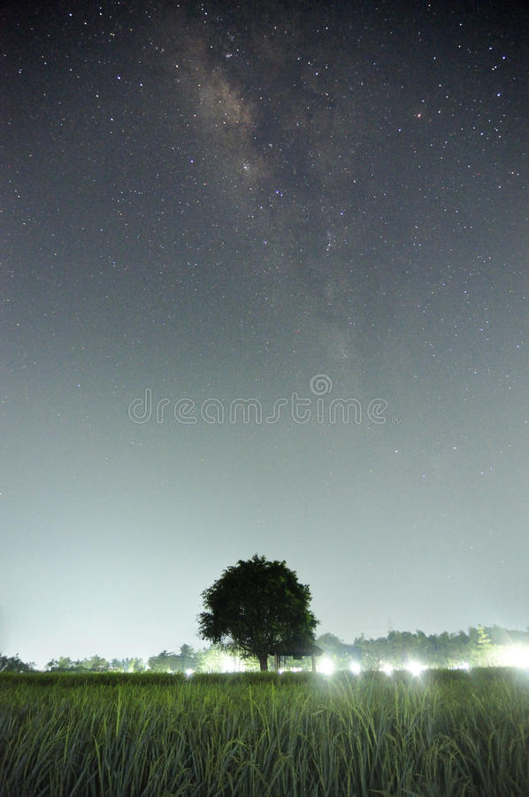 Arbre sous milkyway image stock