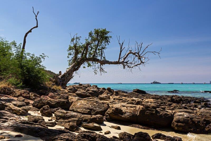 Arbre sur l'île de Phi Phi Don dans la province de Krabi de la Thaïlande photographie stock