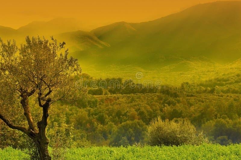 Arbre sur la belle vallée verte images libres de droits