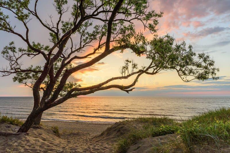 Arbre sur la dune et le coucher du soleil de sable au-dessus de la mer photos stock