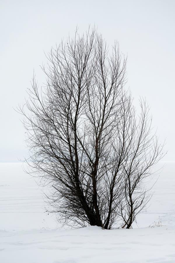 Arbre sur la neige photos stock