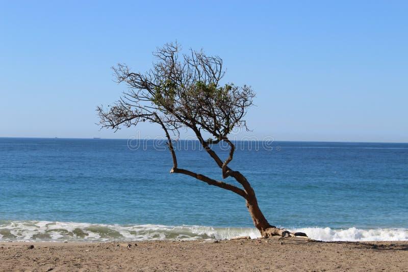 Arbre sur la plage photo stock
