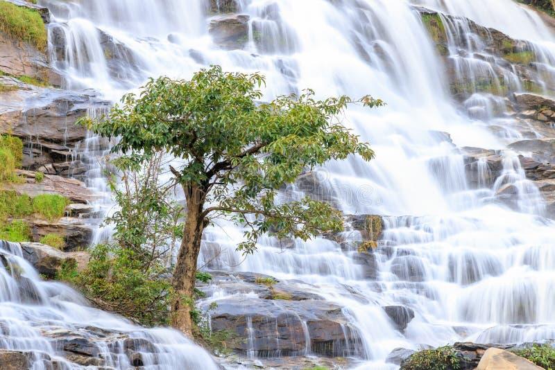 Arbre sur le fond de cascade, Mae Ya Waterfall, Doi Inthanon, Chiang Mai, Thaïlande images libres de droits