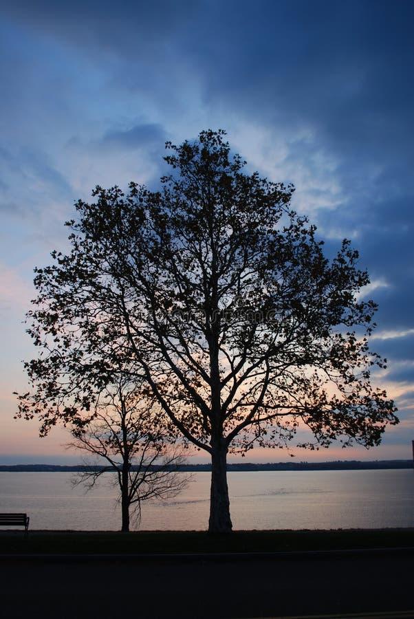 Arbre sur le lac seneca au lever de soleil photo libre de droits